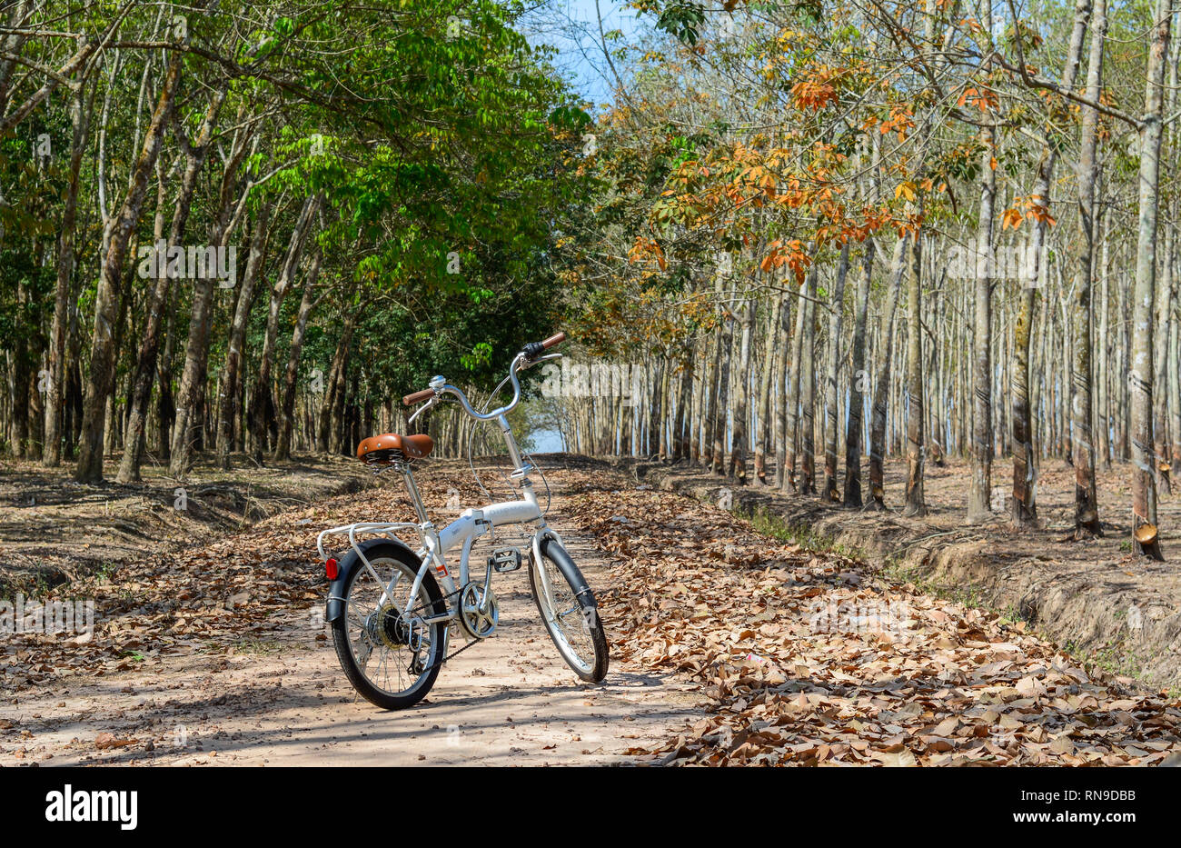 Dong Nai, Vietnam - Feb 4, 2016. A bike parking at rubber forest at sunny day in spring time. - Stock Image