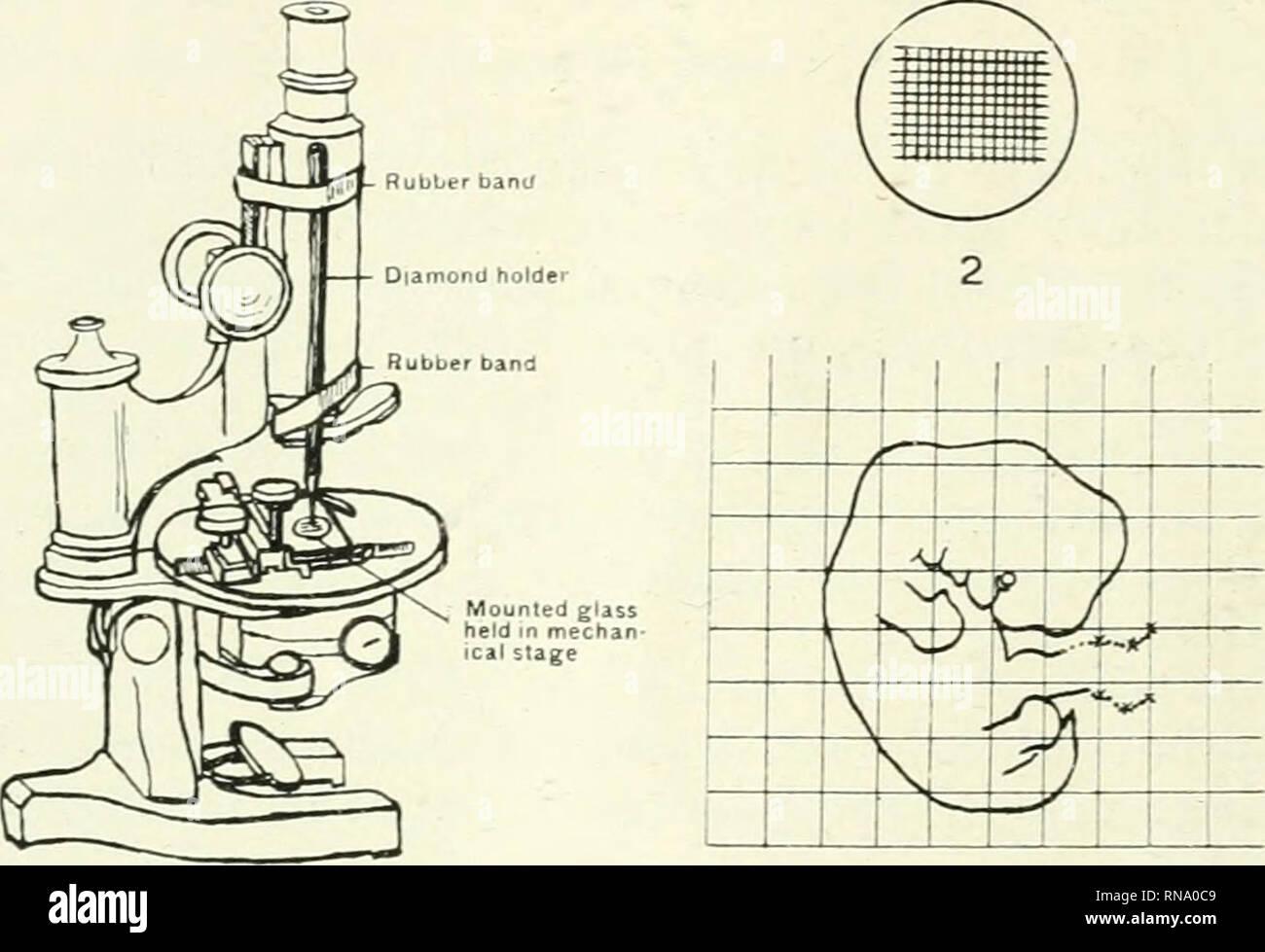 The Anatomical Record Anatomy Anatomy 712 Raphael Isaacs A Smooth