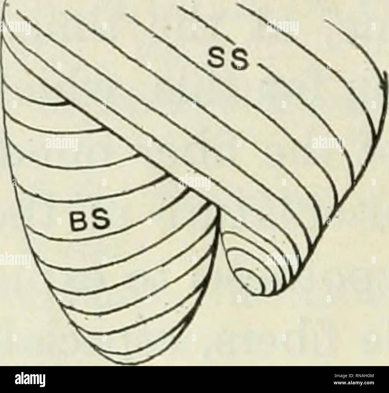 The anatomical record  Anatomy