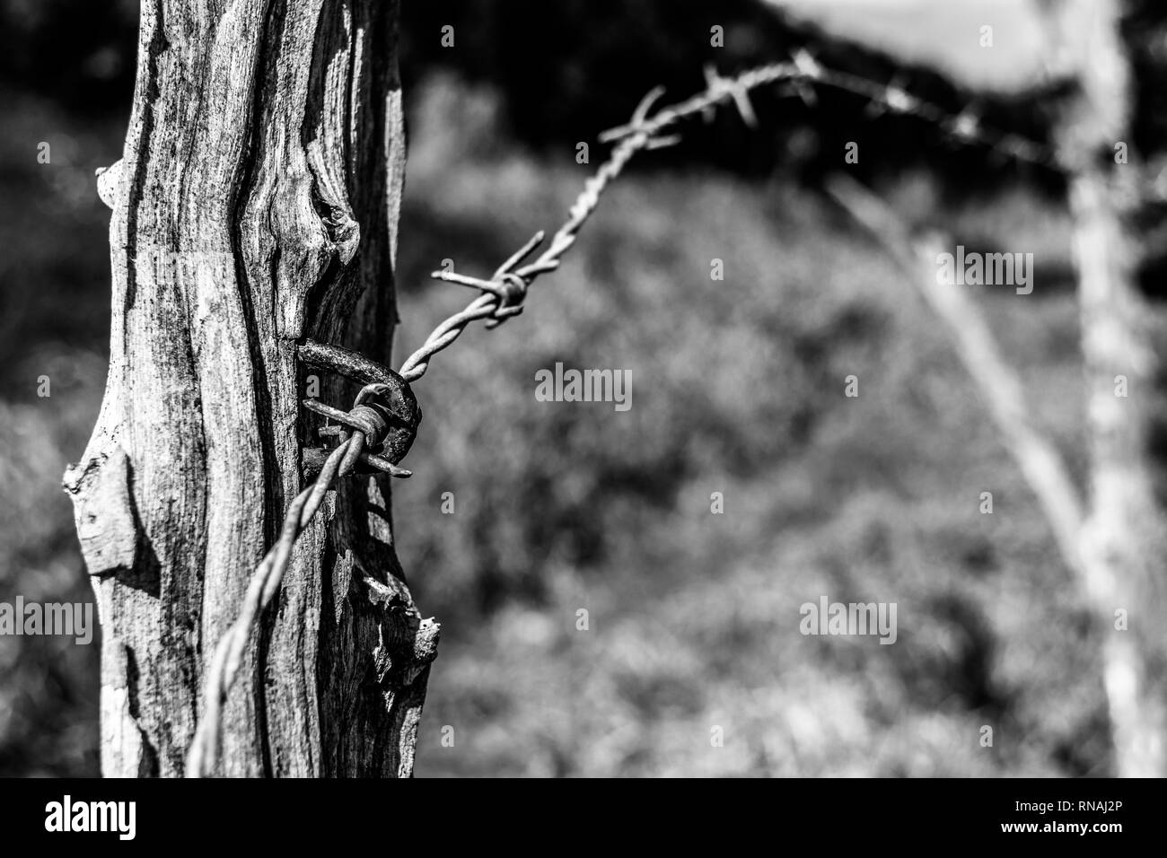 Black and white textured wooden post, part of a barbed wire fence boundary on farm land in rural countryside. Do not enter. Do not cross. - Stock Image