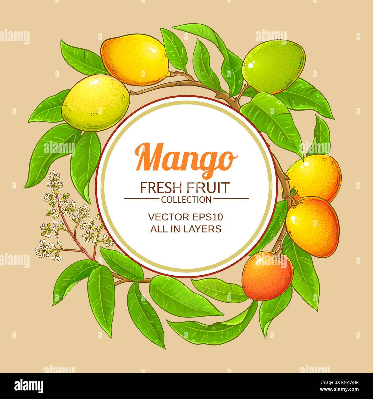 mango vector frame on color background - Stock Image