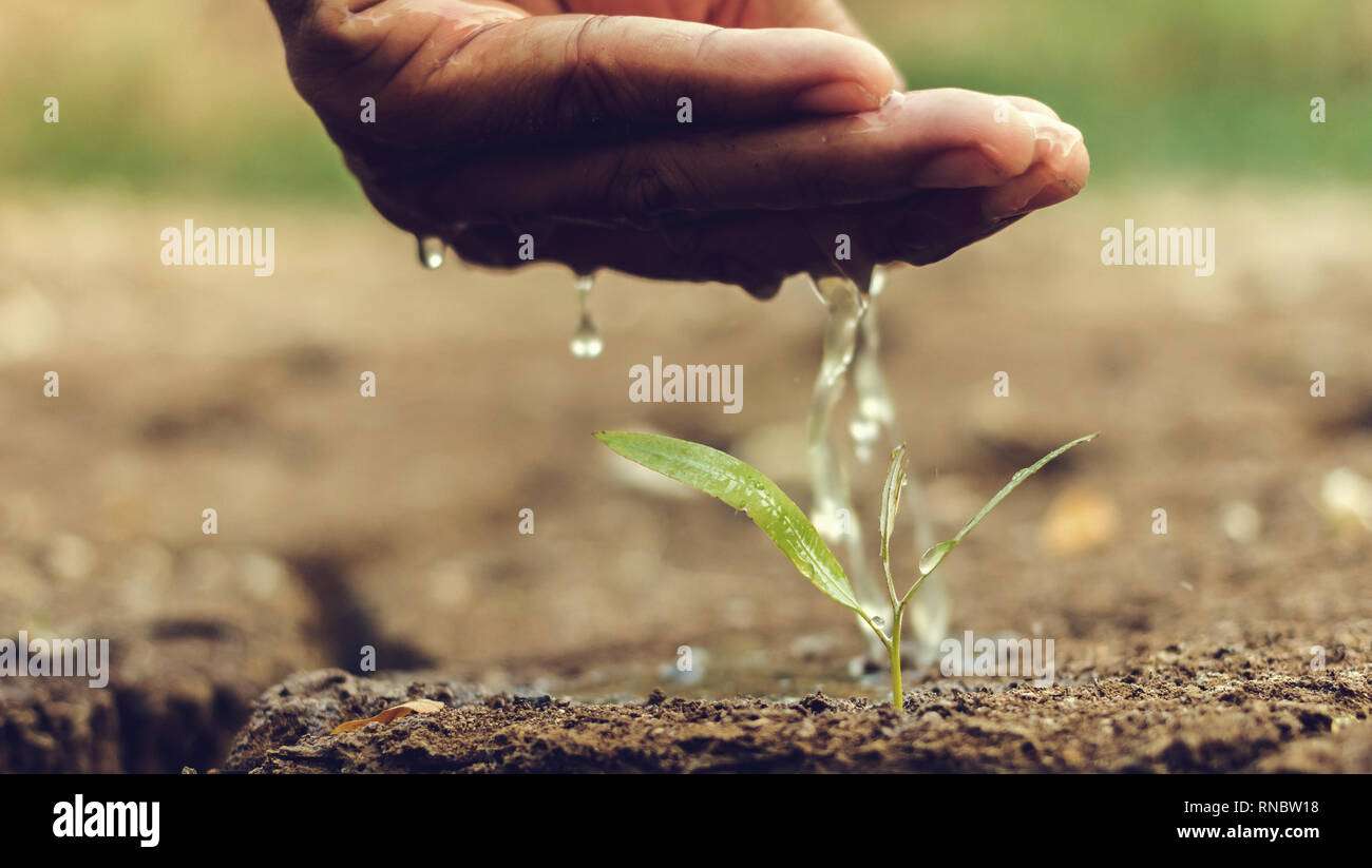 Hand watering the ground barren - Stock Image