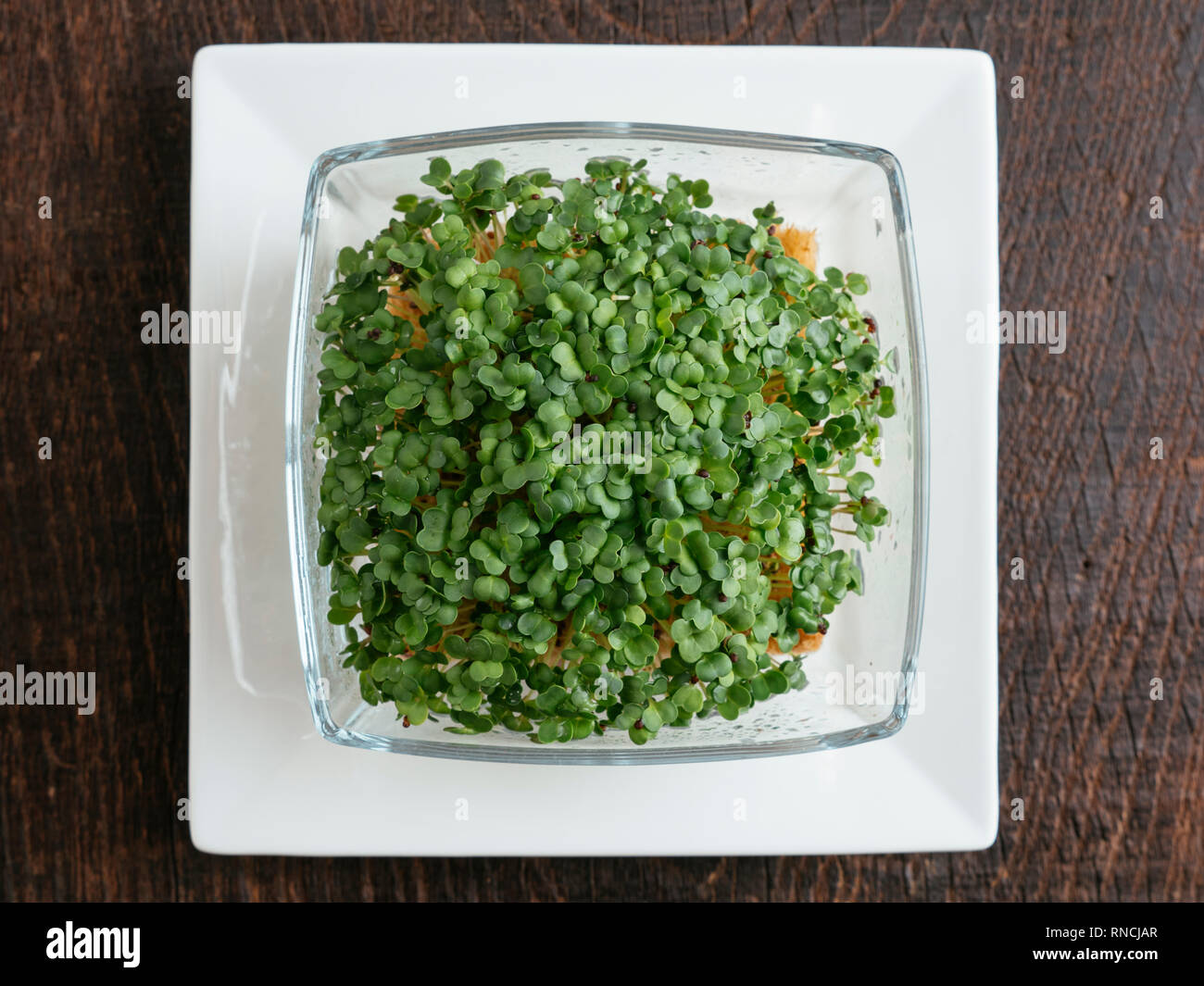 Broccoli Raab (Brassica rapa var. cymosa) sprouts. Stock Photo
