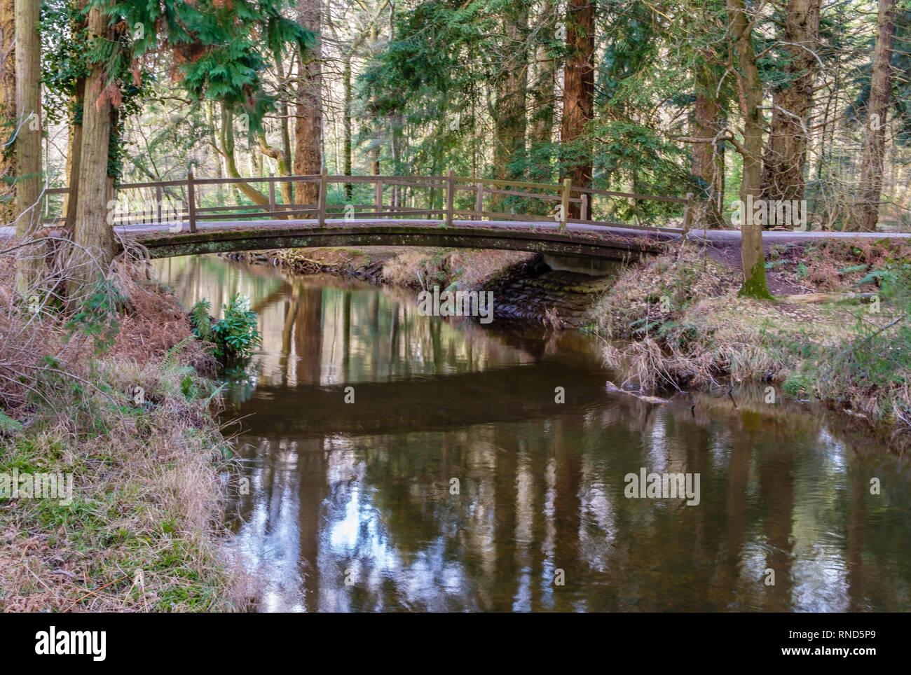 New Forest, Blackwater Bridge, Rhinefield Ornamental Drive, Brockenhurst, UK. - Stock Image