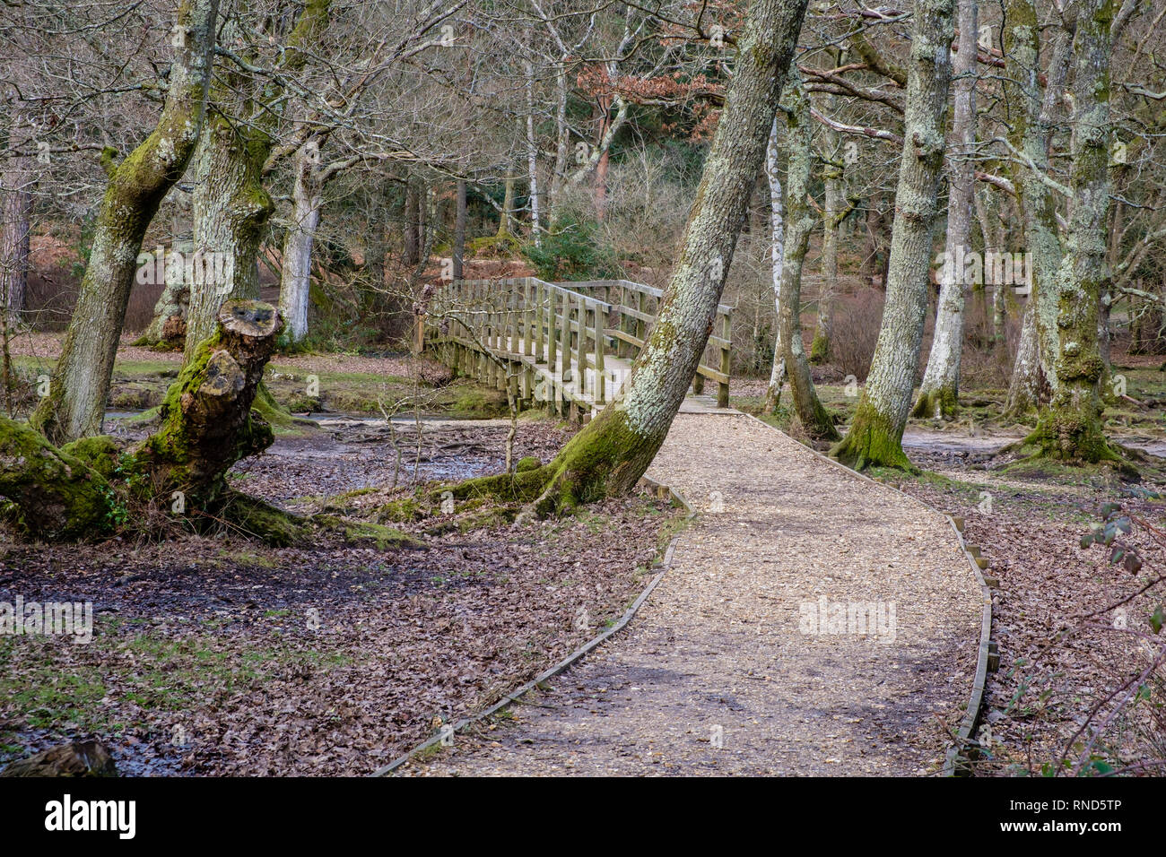 New Forest, Puttles Bridge, Ober Water, Rhinefield Walk, Brockenhurst, UK. Stock Photo
