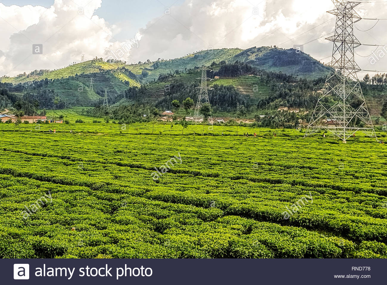 Farms on Hillsides in Rwanda, East Africa - Green Fields with Crops Stock Photo