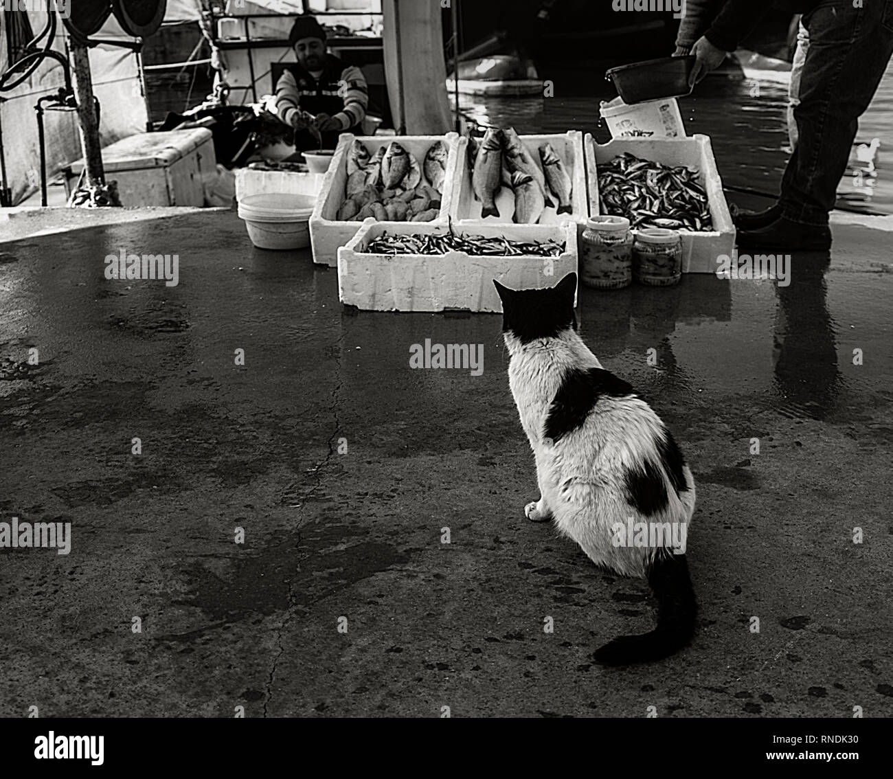 cat in front of fisherman's bench - Stock Image