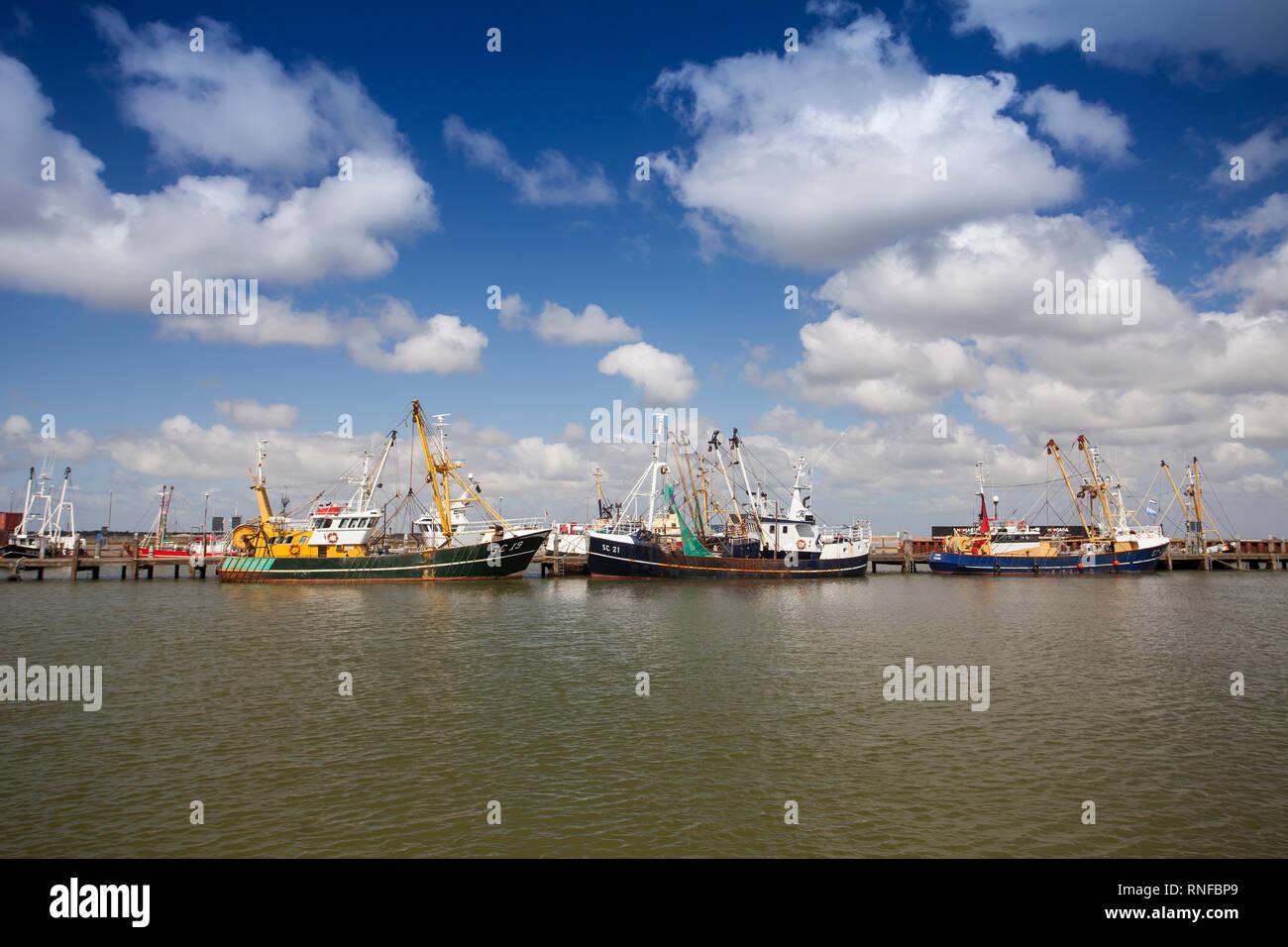 Fishing boats in the fishing port of Roemoe, Juetland, Denmark, Europe - Stock Image