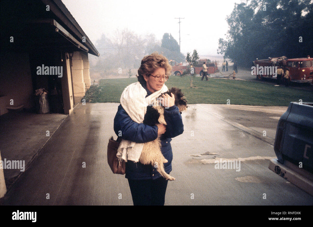A resident flees from a house fire with her dog during the four-day Panorama brush fire, which started in canyons north of town and has been whipped out of control by 40-50 mph winds. Stock Photo