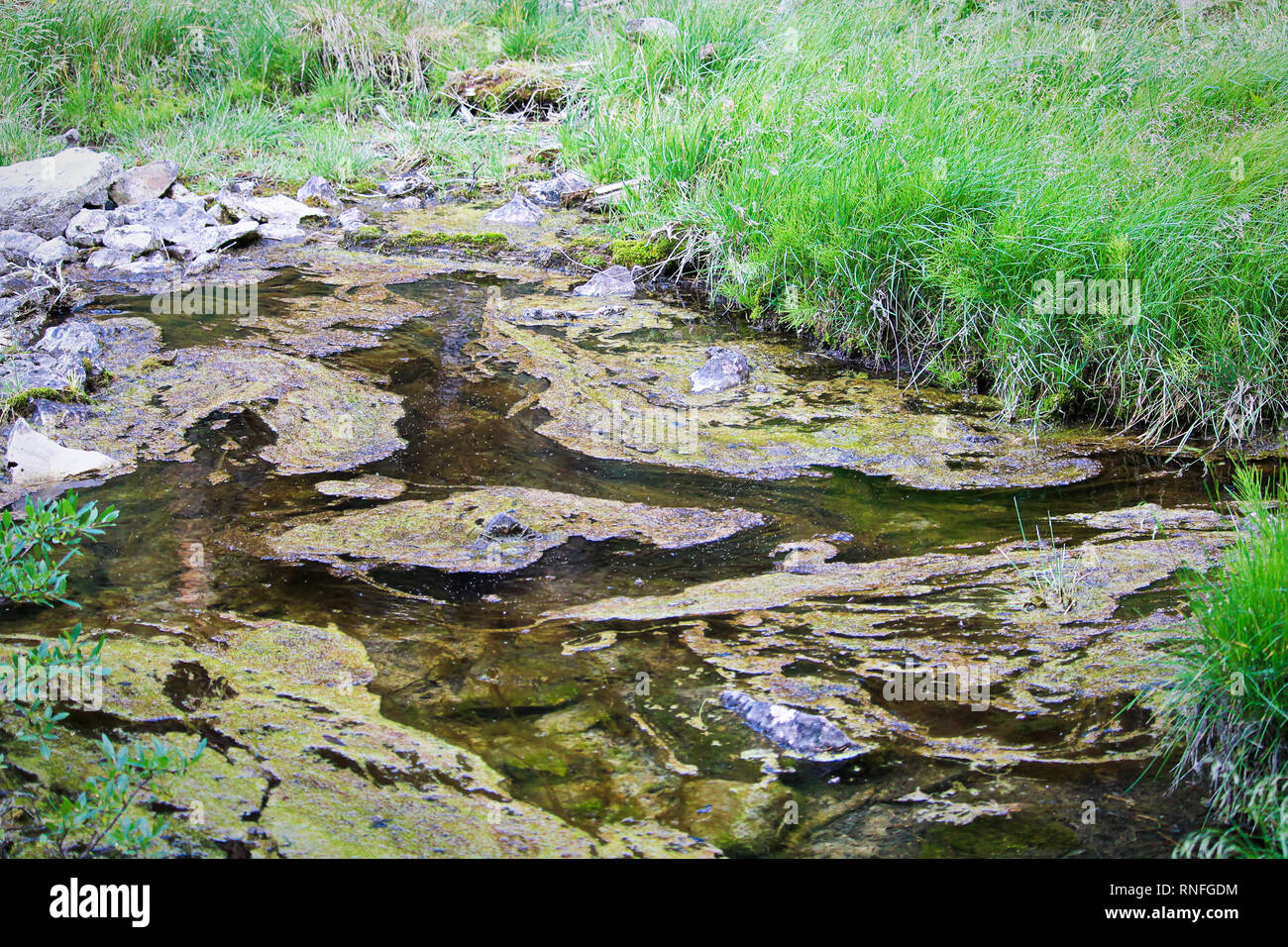 Slime and algae on stagnant and polluted water Stock Photo