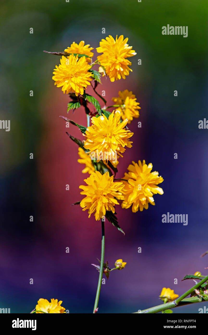 Daisy flower with yellow petals on sunny day, spring. Hope, renewal concept. Spring nature, beauty, environment - Stock Image
