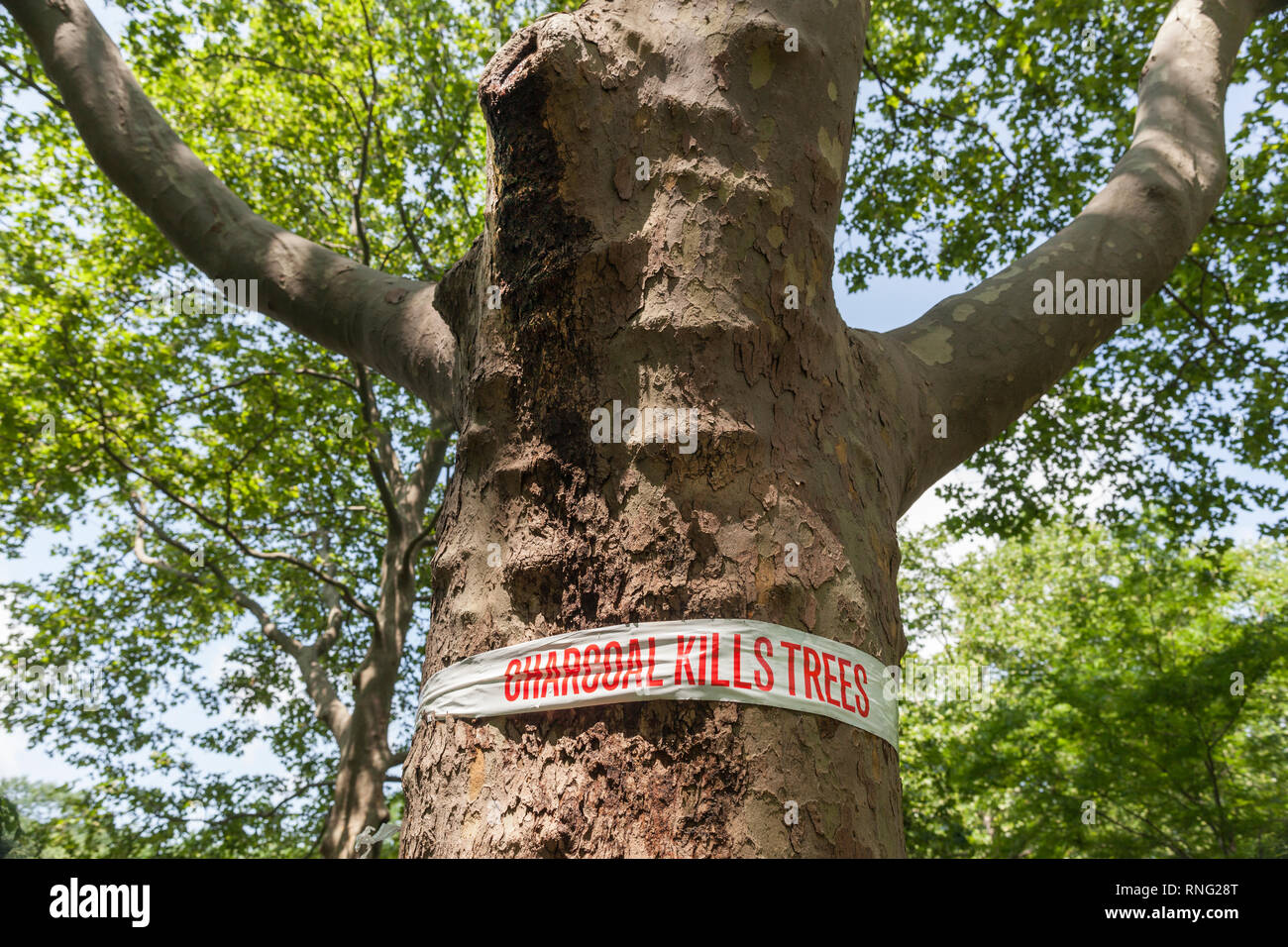 Warning sign to weekend picnickers not to dump their barbecue charcoal against the park tree in New York City, New York, USA. - Stock Image