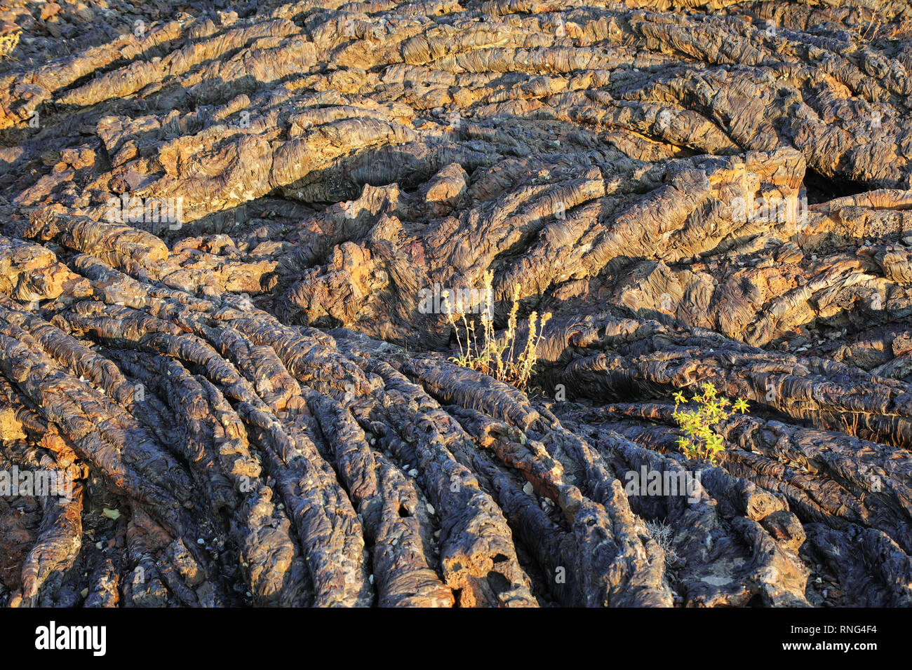 Lava flow field at North Crater Flow Trail, Craters of the Moon National Monument, Idaho, USA. - Stock Image