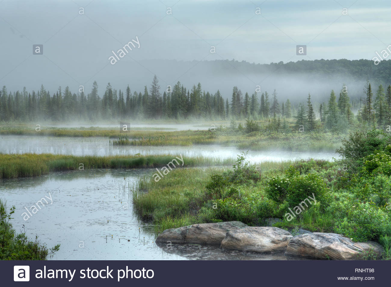 Forest hills of Maple and Tamarack trees in morning mist and fog with river twisting in foreground Opeongo Road Algonquin Park Ontario Canada - Stock Image