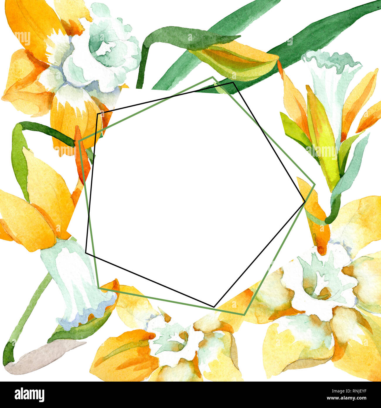 yellow narcissus floral botanical flower watercolor background illustration set frame border ornament square stock photo alamy https www alamy com yellow narcissus floral botanical flower watercolor background illustration set frame border ornament square image237049443 html