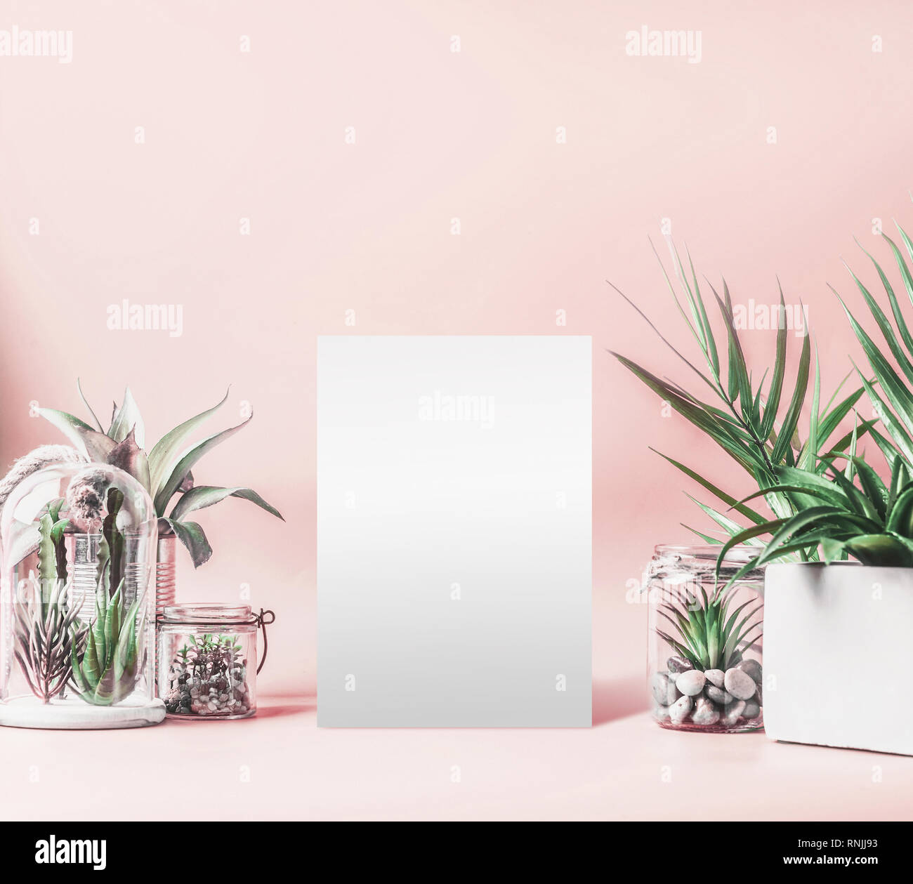 Blank White Sheet Mock Up And Green House Plants In Pots Glass Terrarium And Jars On Table At Pastel Pink Background Various Succulent And Cactus Pl Stock Photo Alamy