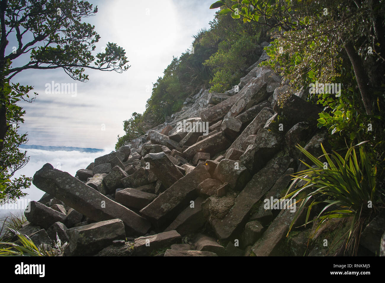 The Organ Pipes, unique basalt columns Mt Cargill, Dunedin, New Zealand. Outcrop and pile of broken pillars, caused by earthquakes and weathering. - Stock Image