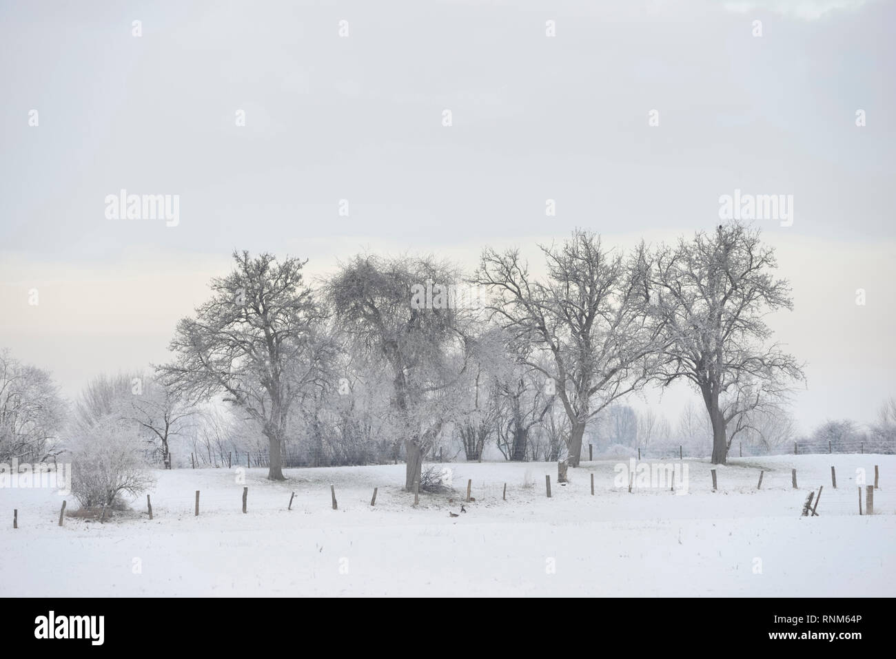 Hoar frosted trees and bushes in rural surrounding on Bislicher Insel / Bislicher Island, typical view, Lower Rhine region, North Rhine Westfalia, Ger - Stock Image
