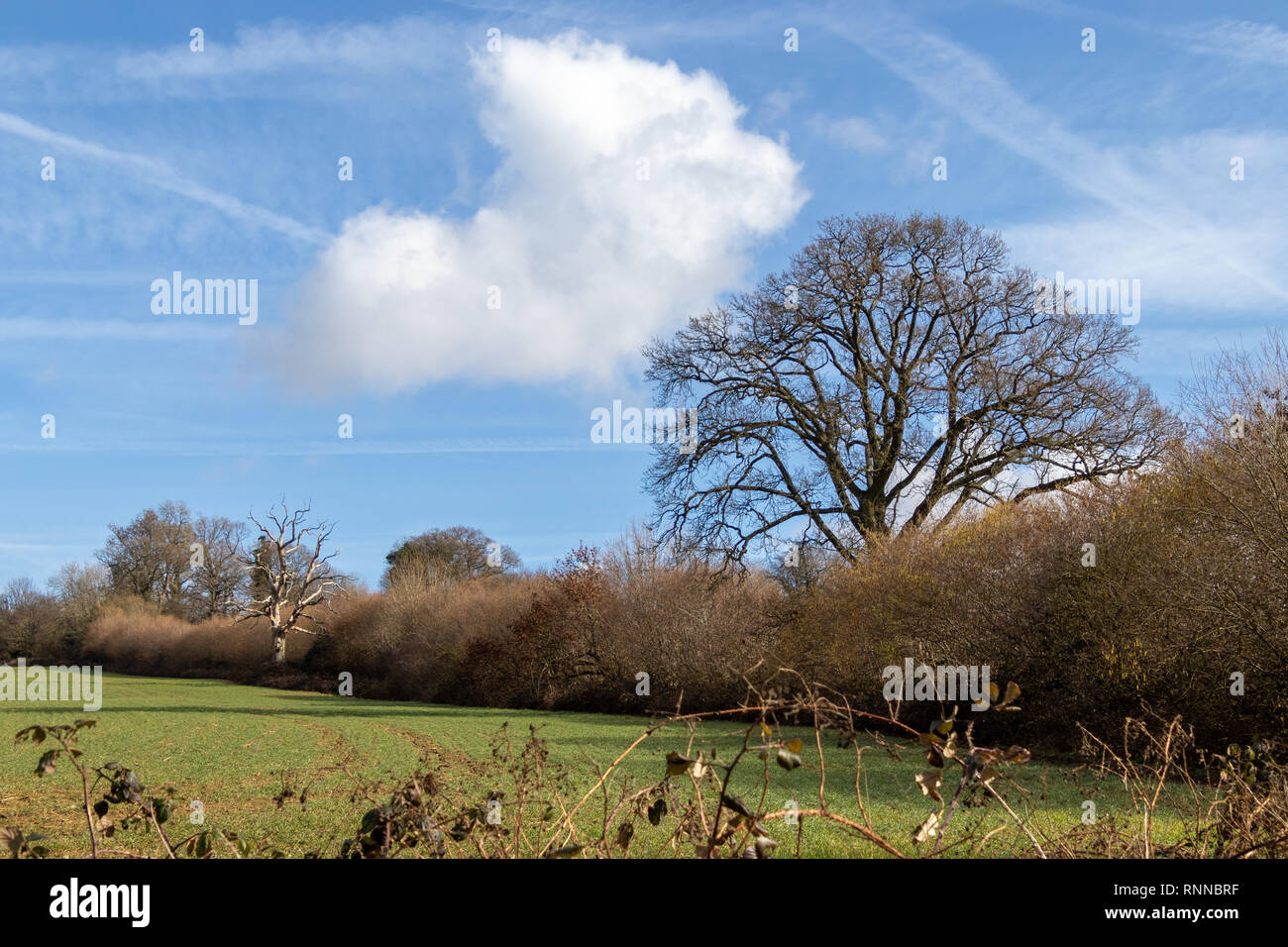 Farmland adjacent to Ardingly Reservoir in Sussex - Stock Image
