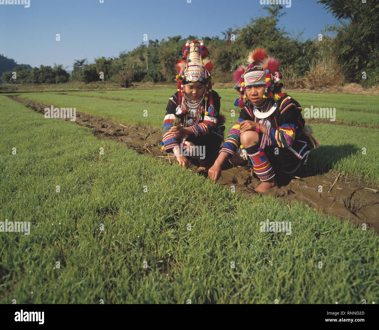 Thailand. Two Akha hill tribe women at work in fields. - Stock Image