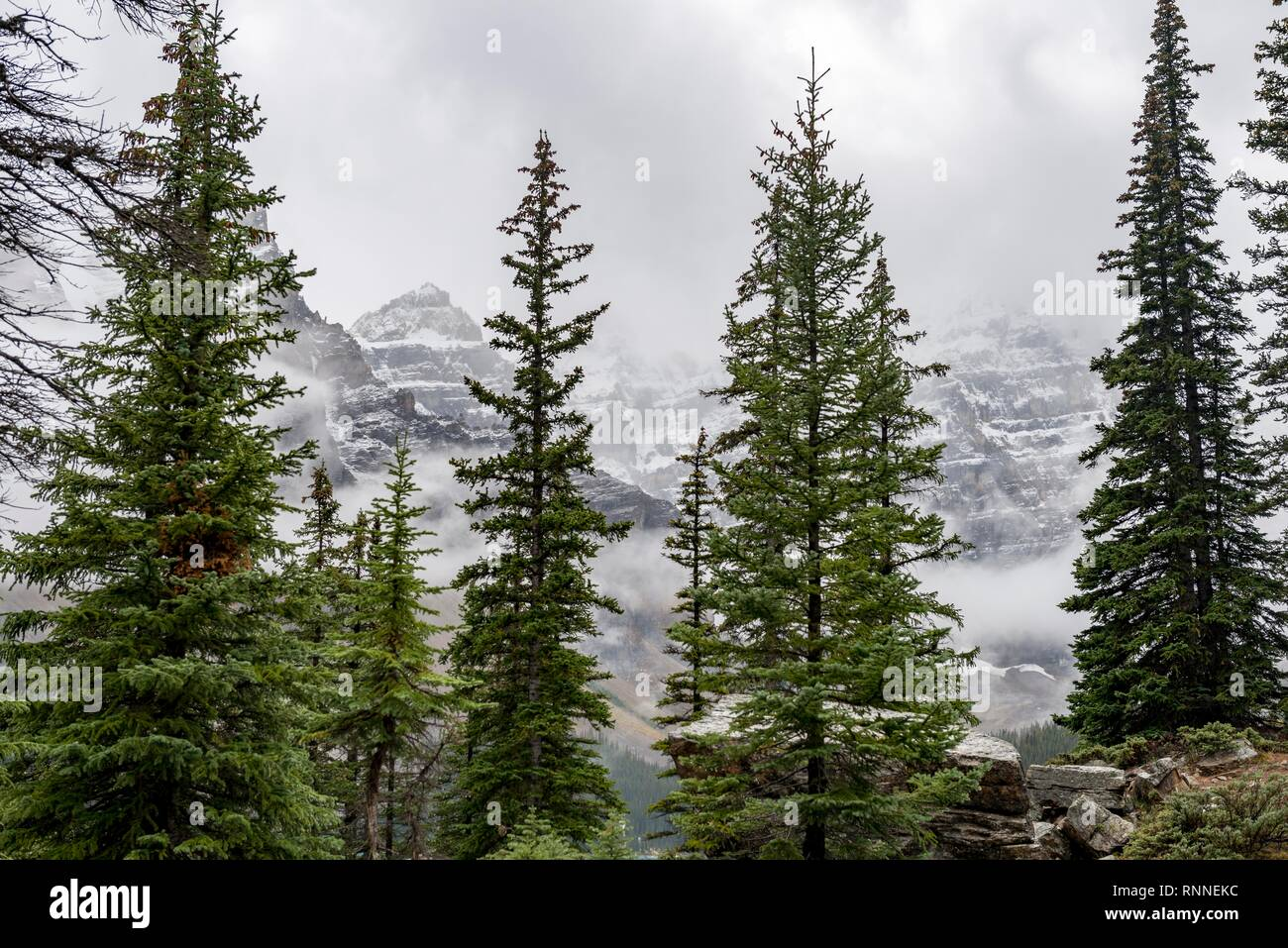 Snow-capped mountain peaks with fog behind conifers, Banff National Park, Alberta, Canada - Stock Image