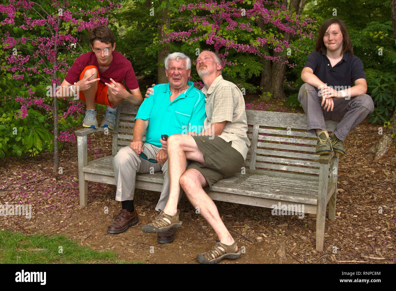 acting silly; 2 men; 2 boys; family; happy; wood bench; flowering trees; fun, grandfather, uncle, nephews, spring; horizontal; MR - Stock Image