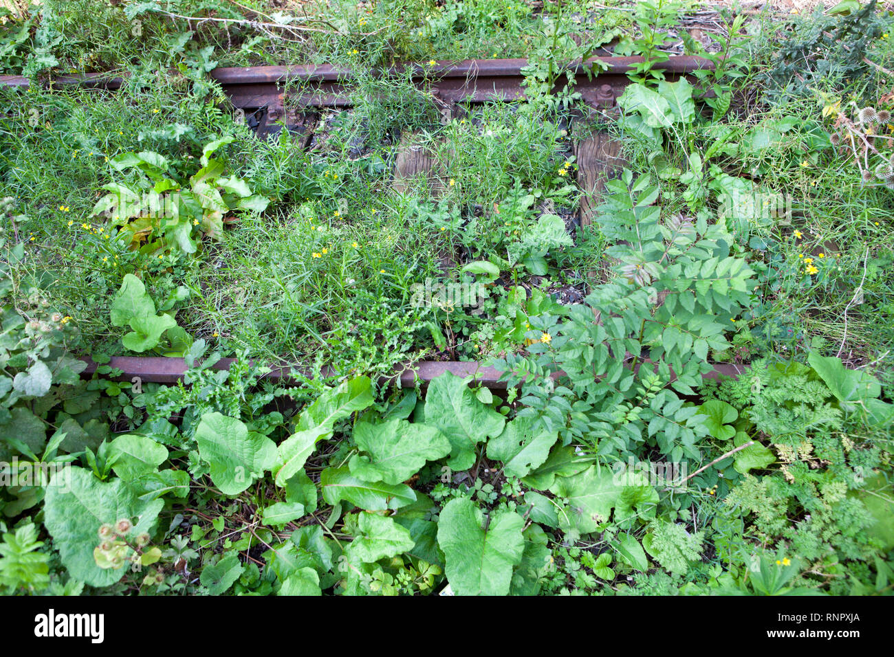Overgrown railway tracks - Stock Image