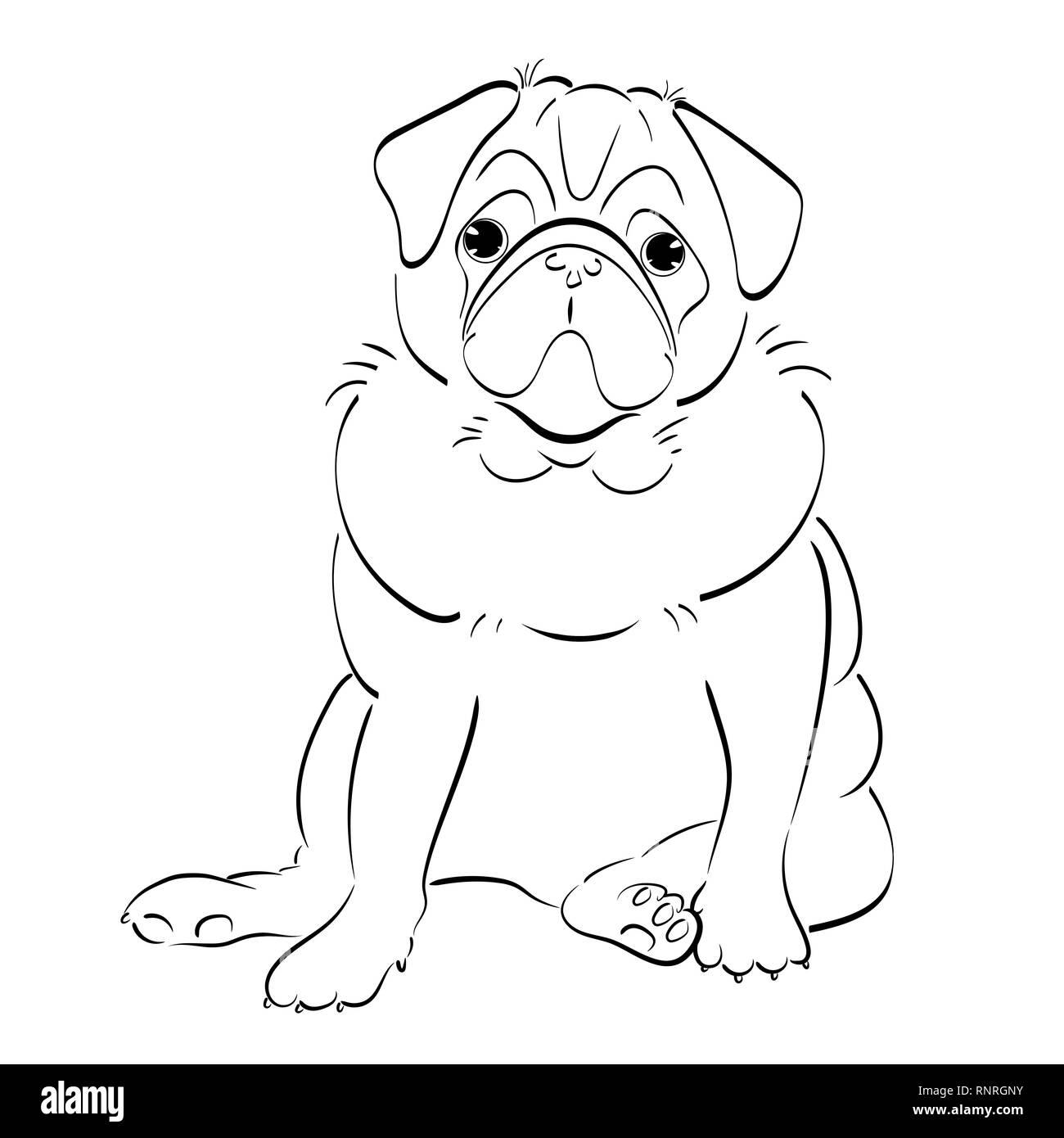 hand drawn line art pug dog, isolated on white background - Stock Image