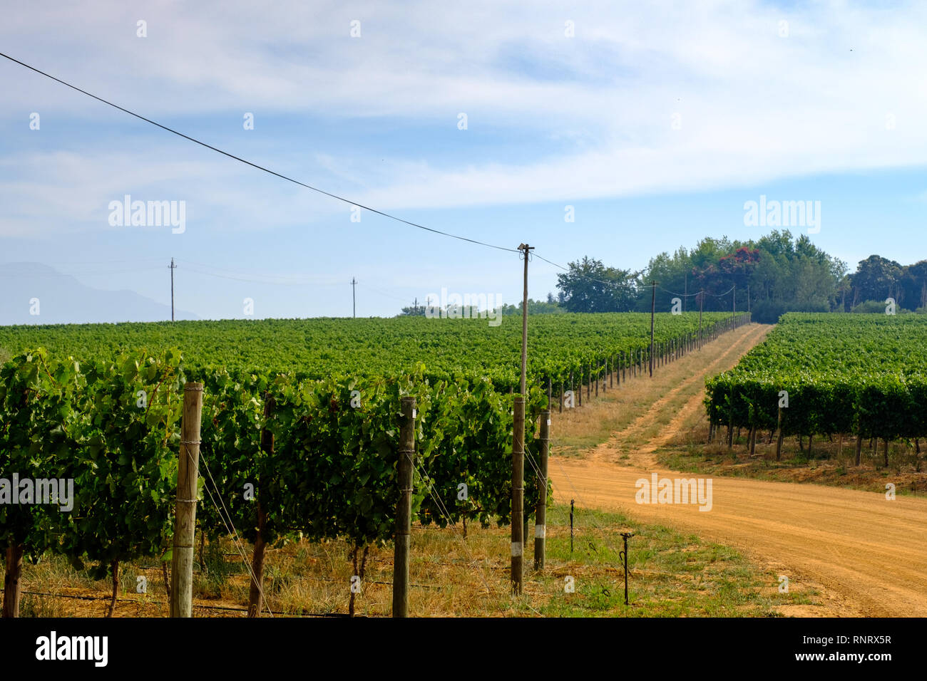 The Thelema Vineyard in Stellenbosch, near Cape Town, South Africa Stock Photo