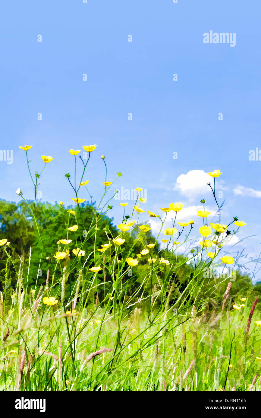 Stylised painterly image of buttercups in a summer meadow against a blue sky Stock Photo