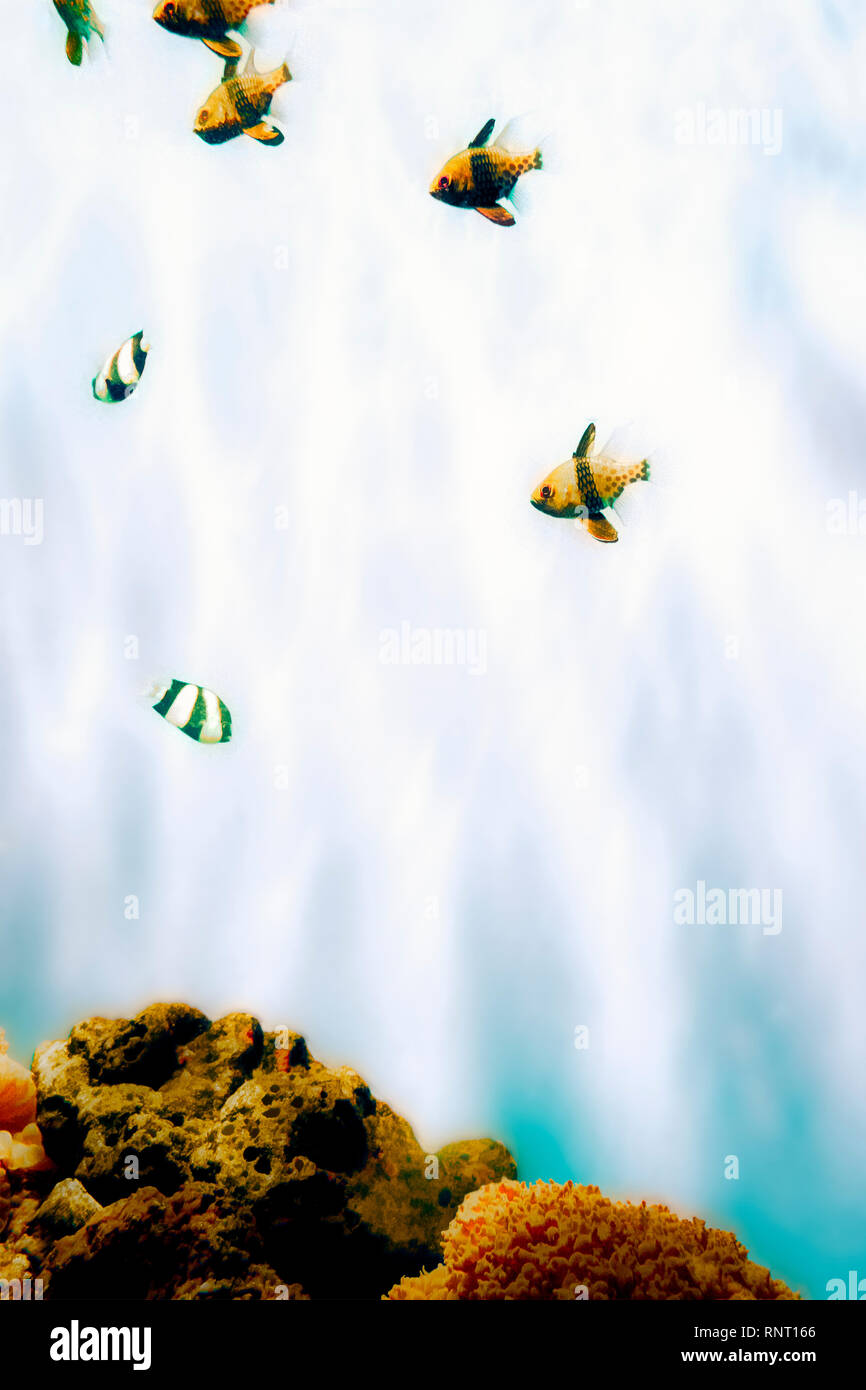 Stylised image of tropical fish swimming in an aquarium, pieces of coral at the bottom - Stock Image