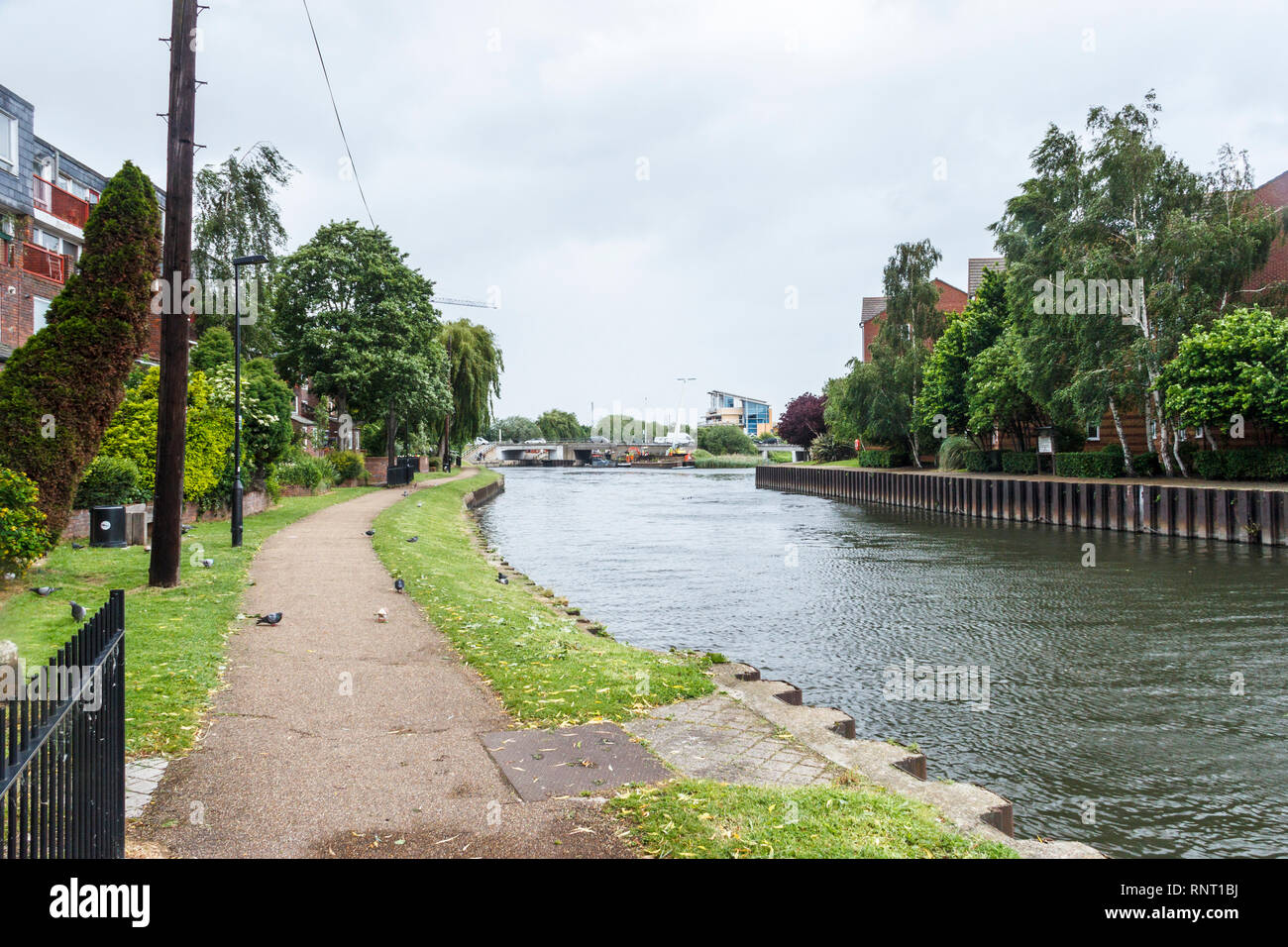 The River Lea in Tottenham, London, UK, looking North, Ferry Lane bridge in the background Stock Photo