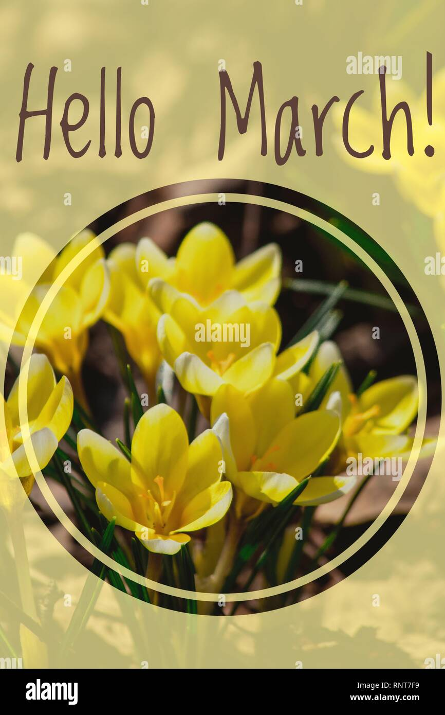 Greeting Card Hello March Welcome Card The Beginning Of