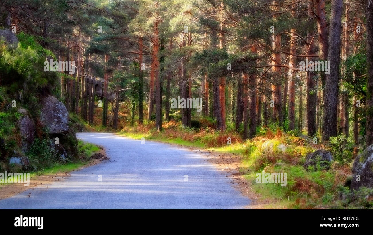 Colorful glowing fairy tale deep forest - Stock Image