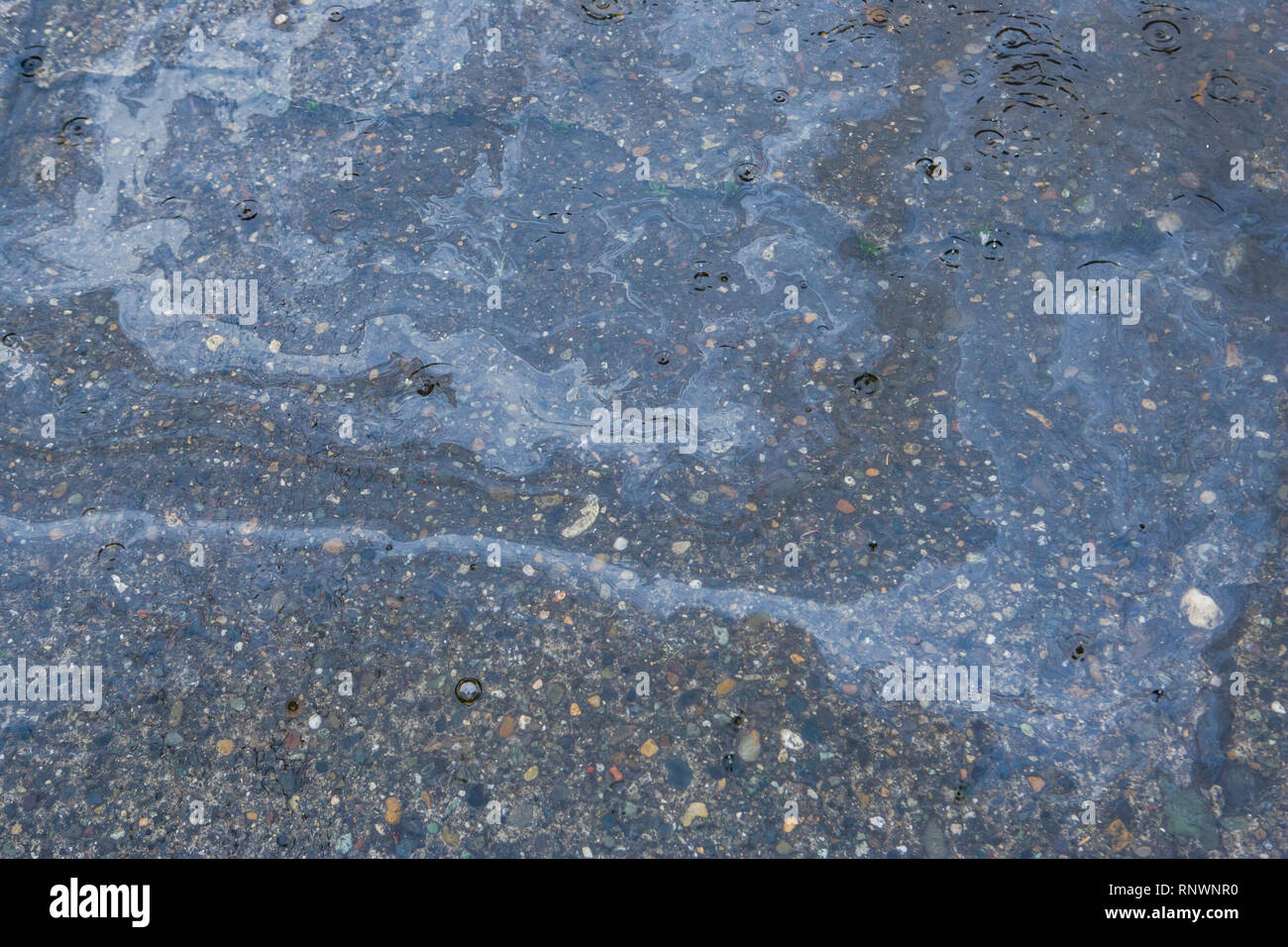 Oil floating on a puddle on a concrete street during a rain storm. - Stock Image
