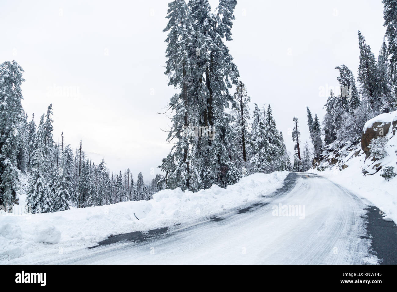 Snow and icy road conditions on SR 190 after a winter storm in Sequoia National Monument, California - Stock Image