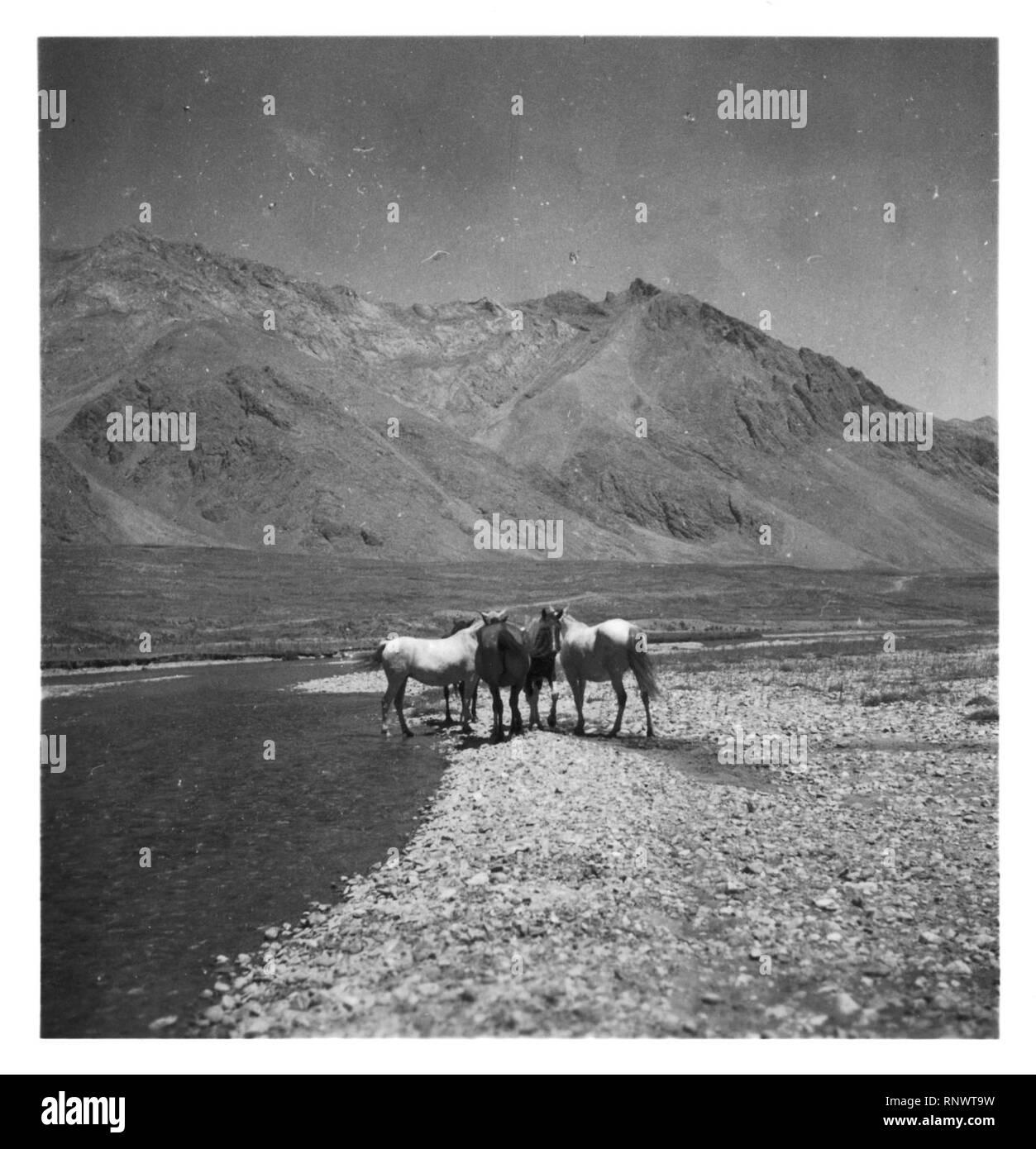 CH-NB - Persien, Elburs-Gebirge (Elburz)- Pferde - Annemarie Schwarzenbach - SLA-Schwarzenbach-A-5-06-184. - Stock Image