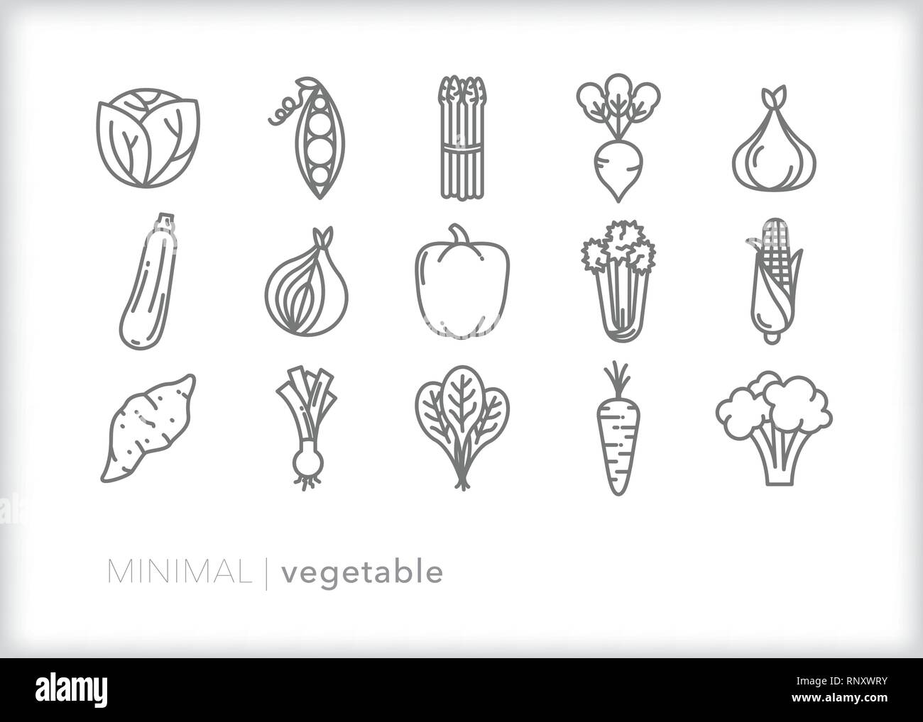Set of 15 food vegetable line icons of fresh, healthy farm veggies including greens, pepper, squash, onion, garlic, asparagus, carrots, broccoli, corn - Stock Vector