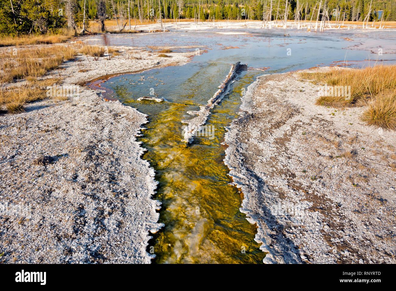 WYOMING - Bulbous sinter lining a colorful creek full of cyanobacteria in the Rustic Group of Heart Lake Geyser Basin in the Yellowstone backcountry. - Stock Image