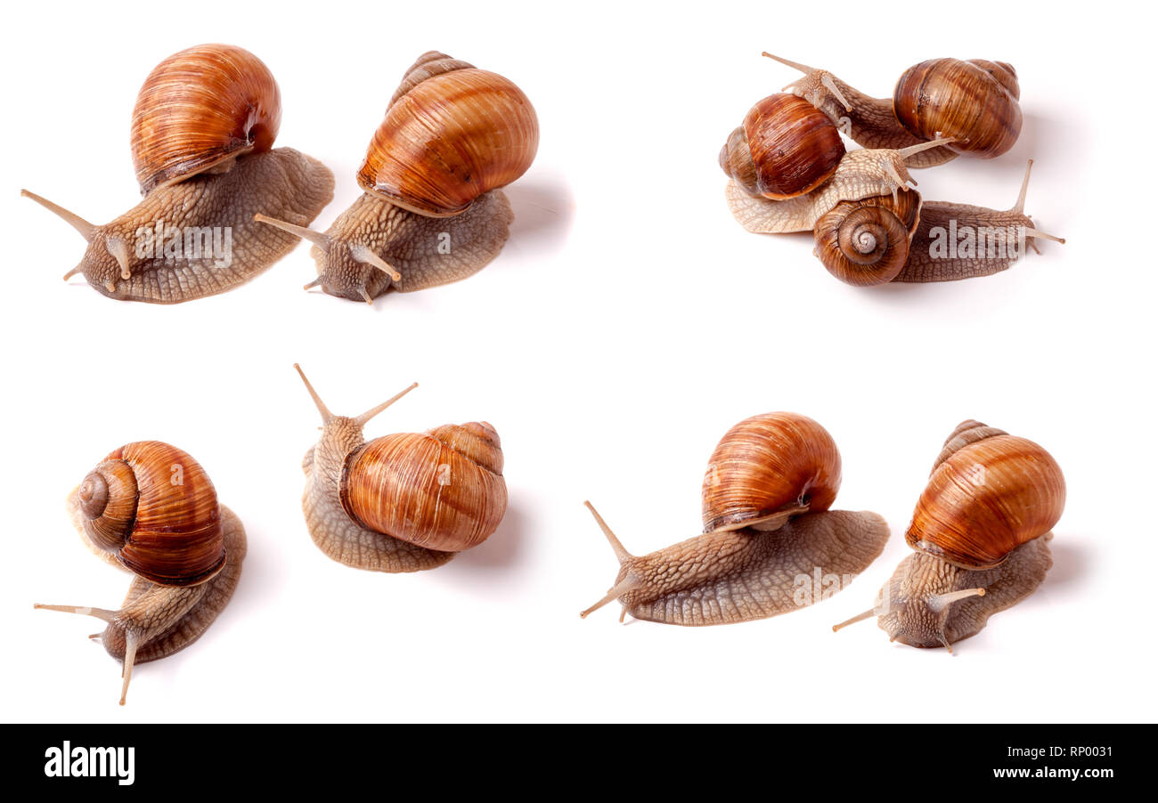 two live snail crawling on a white background close-up macro. Set or collection. - Stock Image