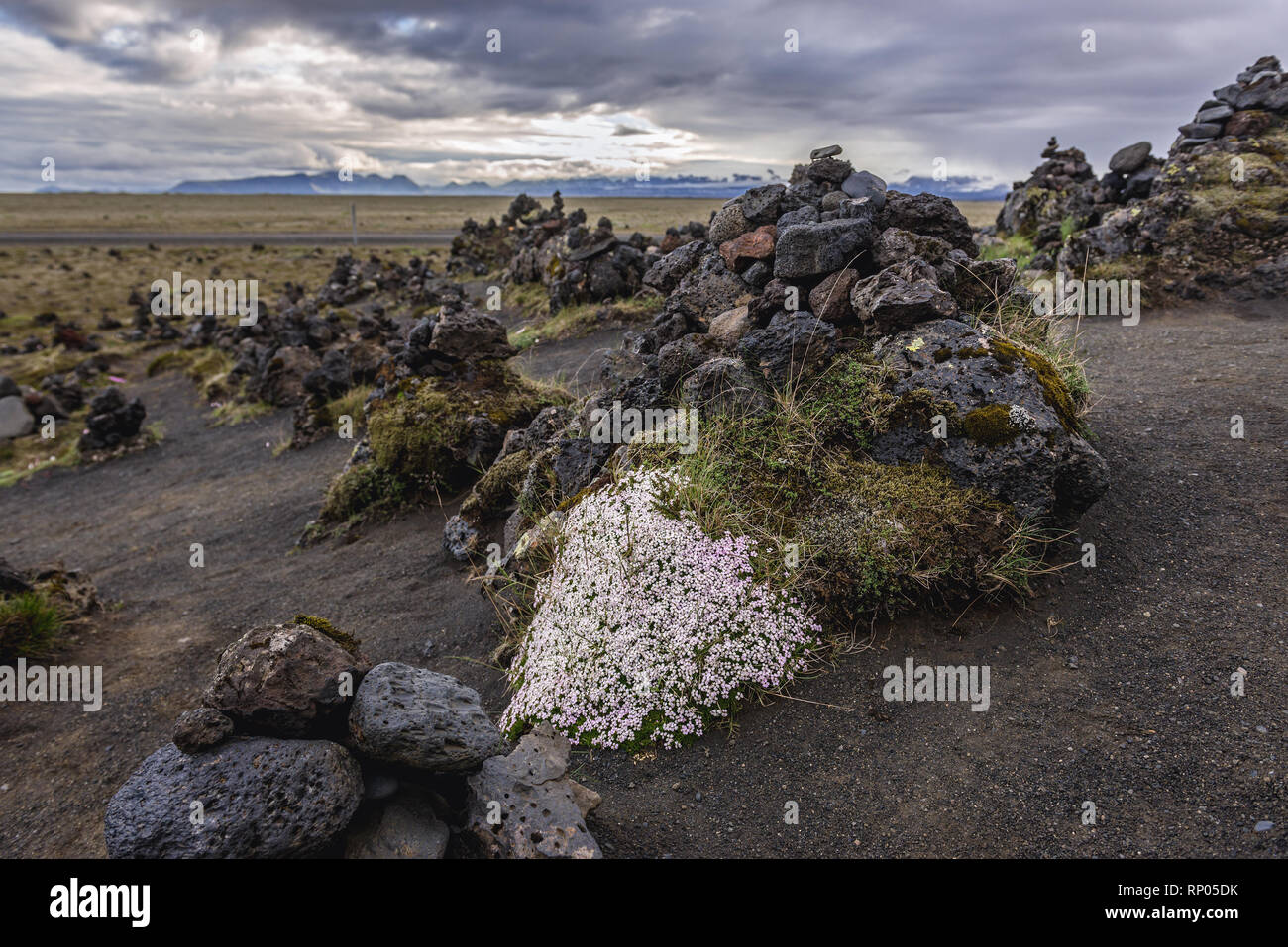 Stone cairns and Arctic Thyme on a Laufskalavarda lava ridge in Iceland - Stock Image