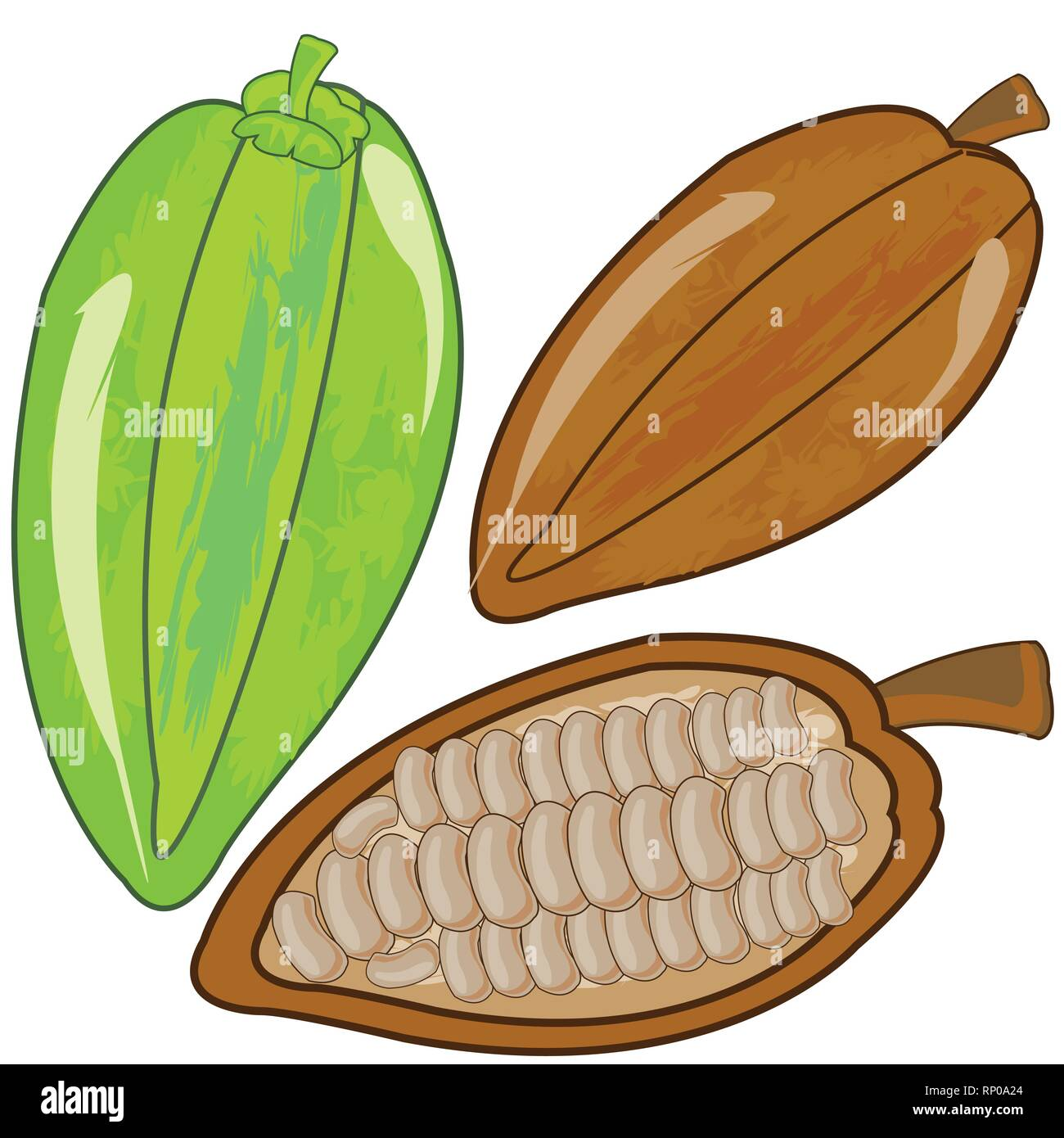 Fruits cacao ripe and green on white background is insulated - Stock Vector