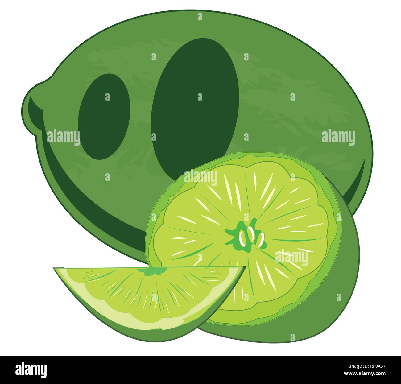 Vector illustration of the south fruit lime - Stock Vector