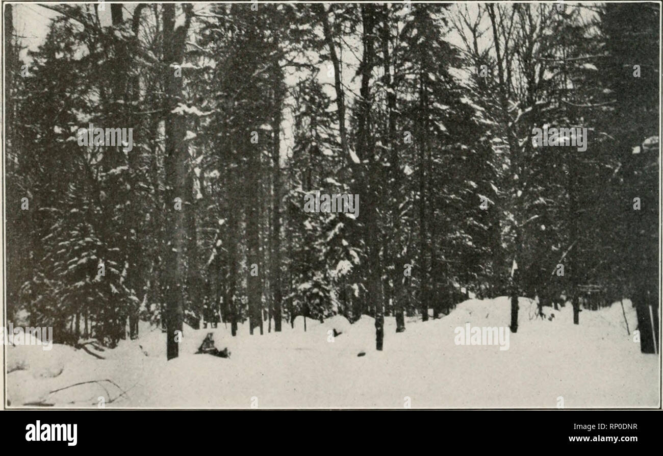 American forestry  Forests and forestry  LUMBERING AND