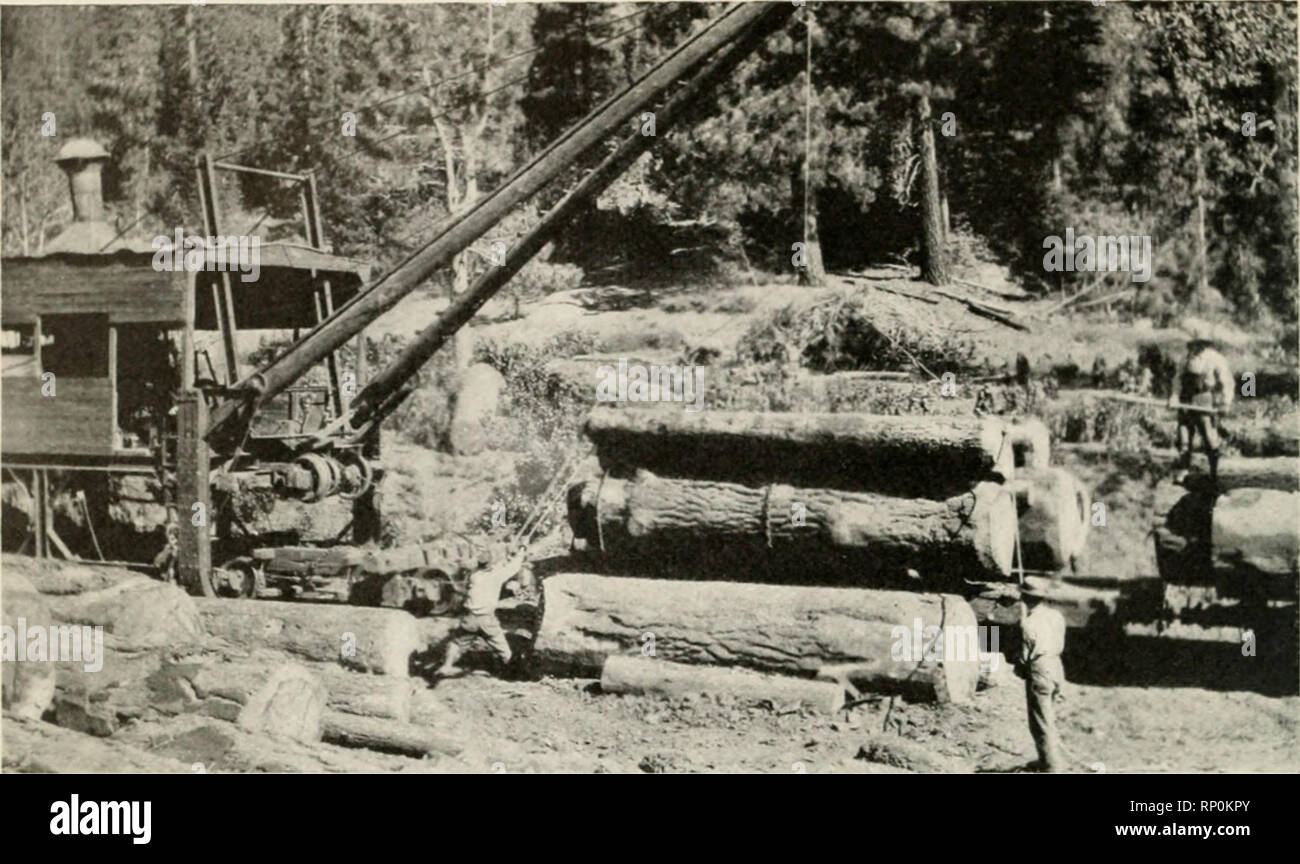 American forestry  Forests and forestry  STEAM LOADER 0