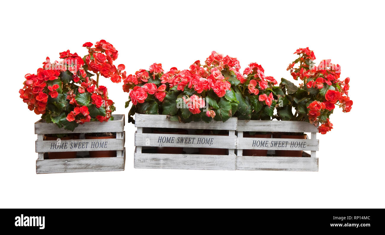 Flowers boxes hanging on the wall - Home sweet home written on wooden box on white background - Stock Image