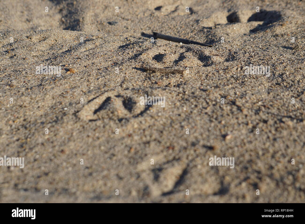 Duck tracks in the sand - Stock Image