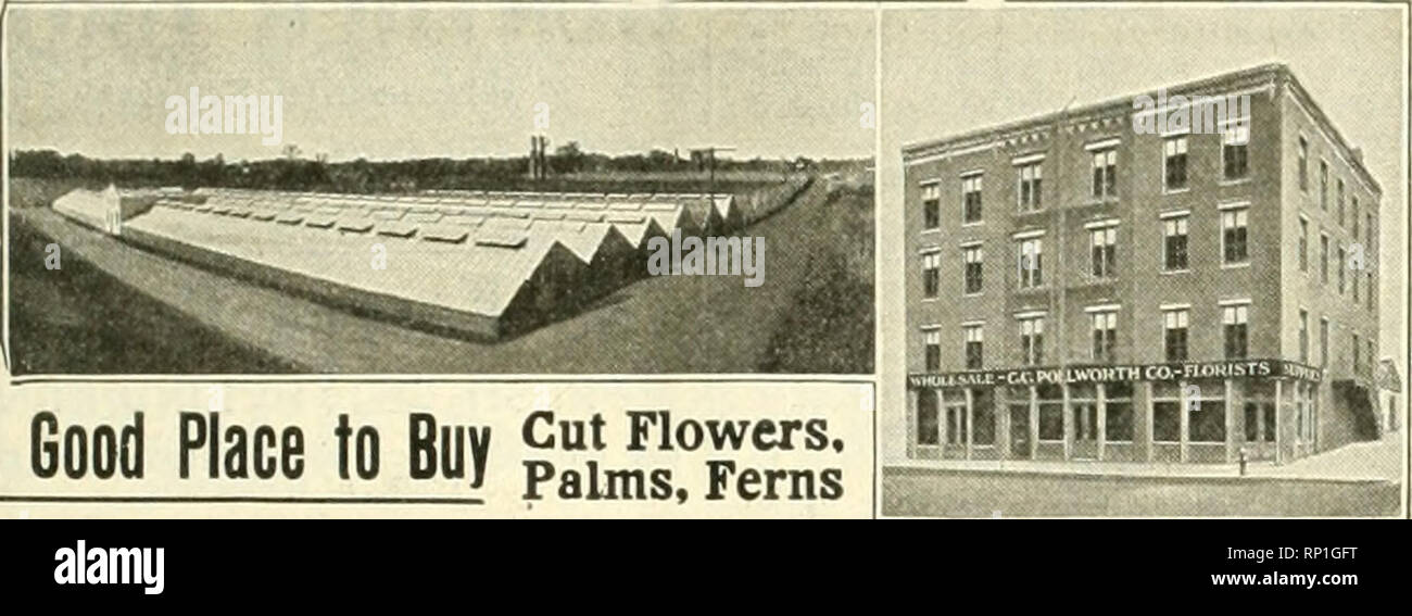 . The American florist : a weekly journal for the trade. Floriculture; Florists. tgn. The American Florist. 1096 Asparagus Plumosus Nanus Cut Strings, 8 feet long, BOc each. Pink Killarney, Rose Plants Own Root Stock. Send for Prices. i W. H. ELLIOTT, Brighton, Mass. WELCH BROTHERS, 2Ze DevonaUre St., BOSTON, MASS. Acacia Pubescens, American Beauty, Galley, Carnations, Killarney, Richmond, Maryland and other seasonable stock.. Please note that these images are extracted from scanned page images that may have been digitally enhanced for readability - coloration and appearance of these illustrat - Stock Image