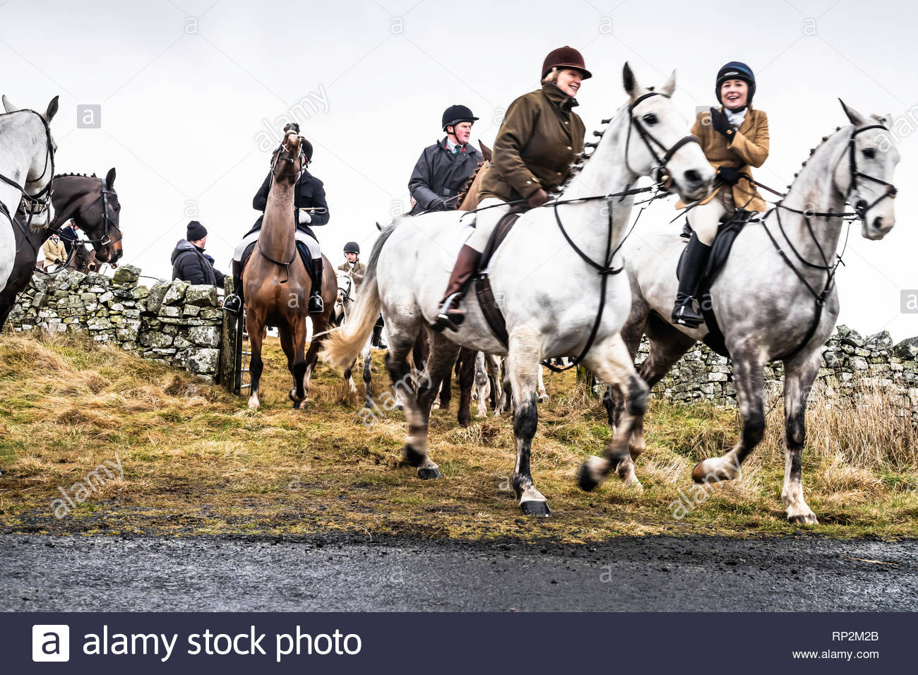 Kelso, UK. 20th February 2019. Wind and rain didn't deter a sizeable midweek field following the Duke of Buccleuch Hunt over the hills around Morebattle village in the Scottish Borders. Credit: Chris Strickland / Alamy Live News - Stock Image