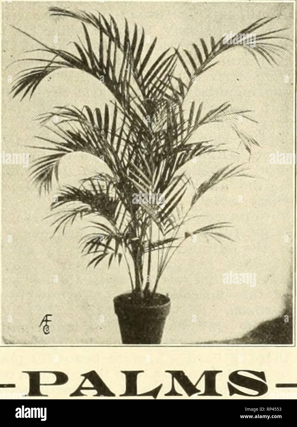 . The American florist : a weekly journal for the trade. Floriculture; Florists. Pteris Wilson WITTBOLD'S Plants ARE BEST 1 fe 1 ^ p 'i' Pteris Serrulata Order Today and Avoid the Risk of Cold Weather Shipments Bedding Plants p. de Bailey 2-ln., $2.60 per Aohryanthes, 100. Ageratum, Stella GorDey and Princess Pauline, 2-ln., $2.00 per 100. COLEUS, 2-inoh. Per 100 Pflster, red and yellow 12.00 Beckwlth's Gem 2.00 Golden Bedder g.OO Verschalteltll 2.00 Geraniums, S. A. Nutt, Rose, 2-ls., $2,00 per 100. Gnapballum Lanatum, 2 In., $2.00 per 100. Heliotrope, 2'ln., $2.00 per 100. Ivy, German, 21n.. - Stock Image